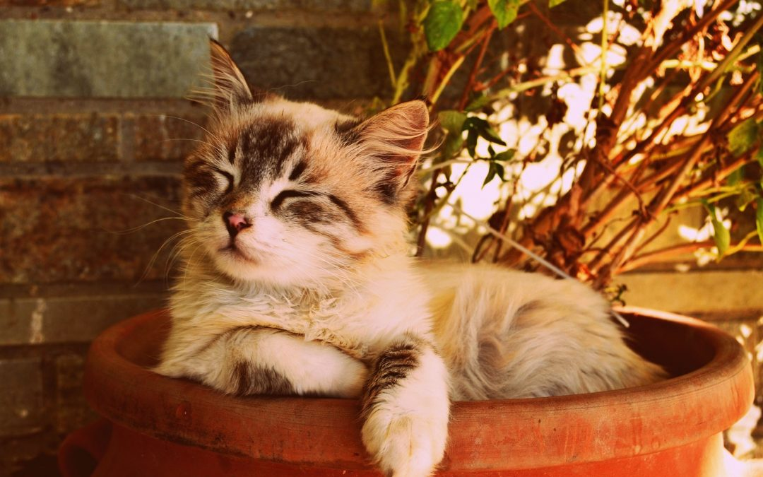 Veterinary Foods for Stress Cystitis